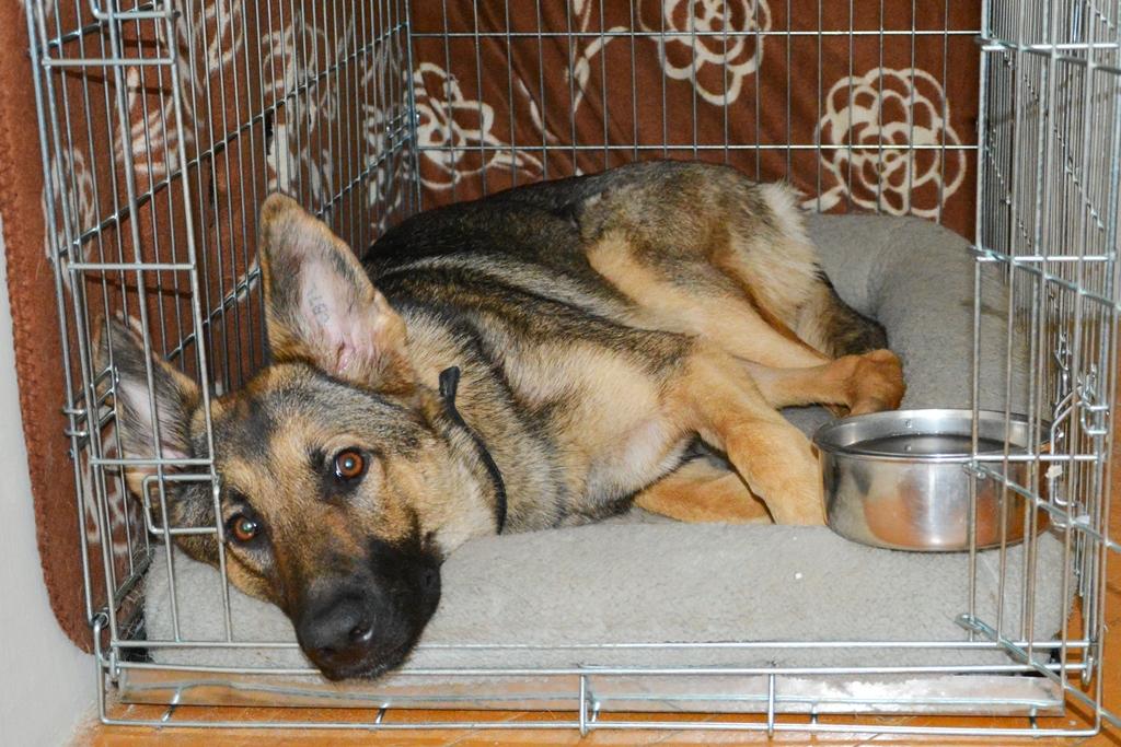 Jak nauczyć psa zostawania samemu w domu